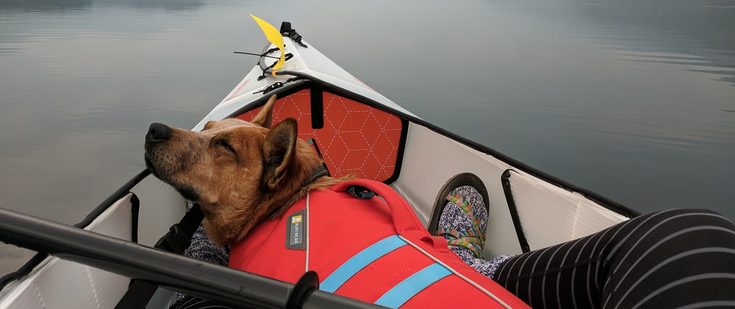 Dogs - Kayaking with the Family