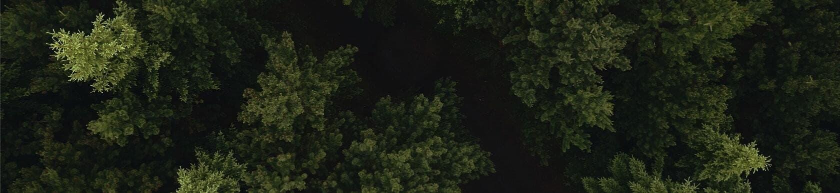Tannenwald von oben Teaser Image