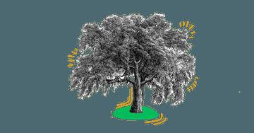 Sustainability Nachhaltigkeit Baum bei Quiply