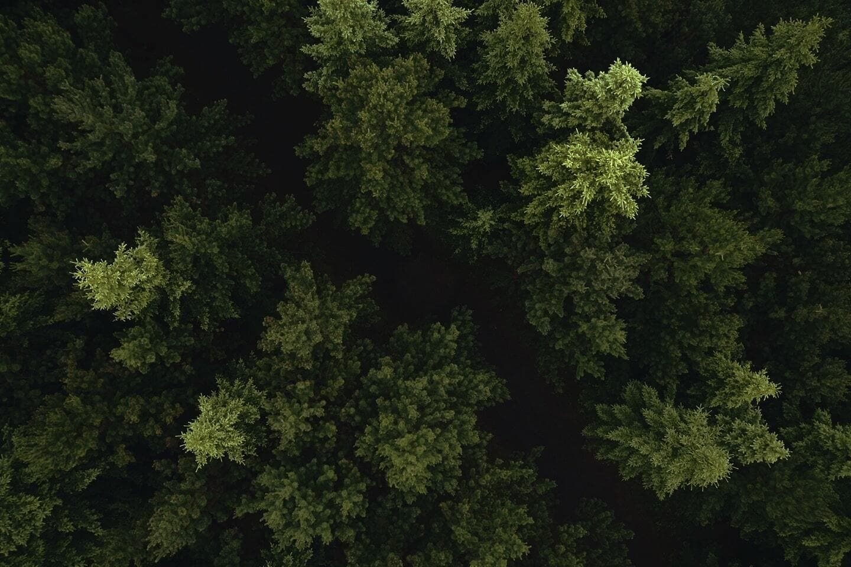 Tannenwald von oben Vogelperspektive