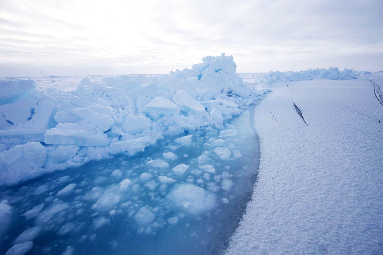 Arctic Live 2020 Hero Image