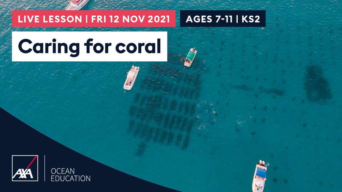 Caring for Coral KS2 CL2021 Slate