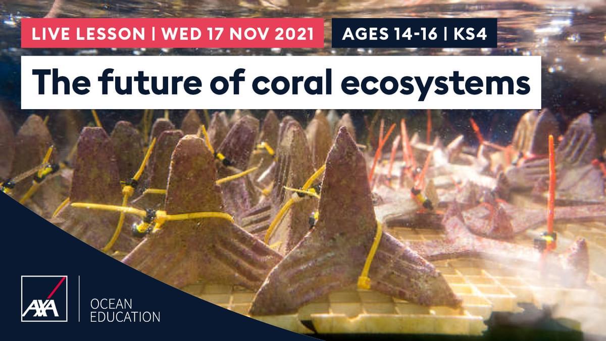 Future of Coral KS4 CL2021 Slate
