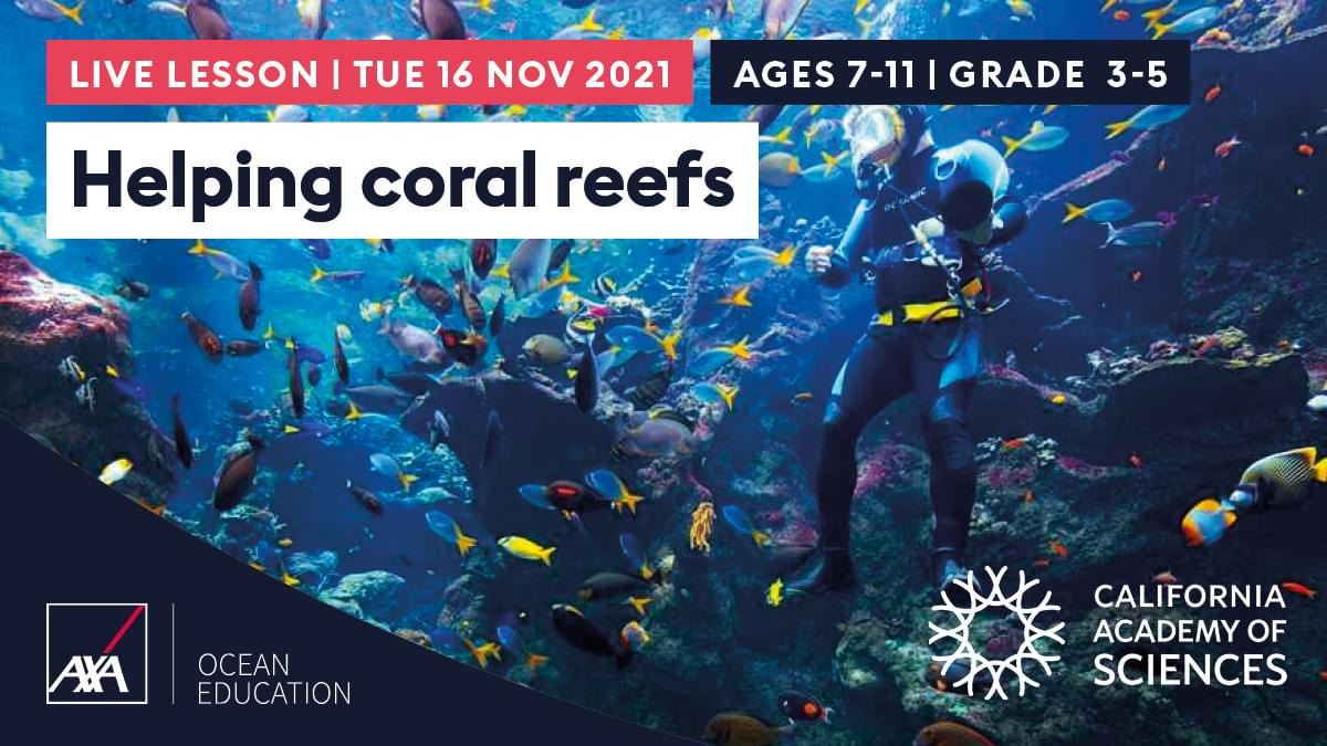 Helping Coral Reefs USA CL2021 Slate
