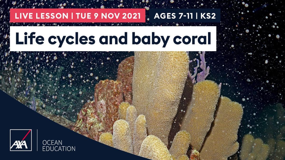 Life cycles KS2 CL2021 Slate