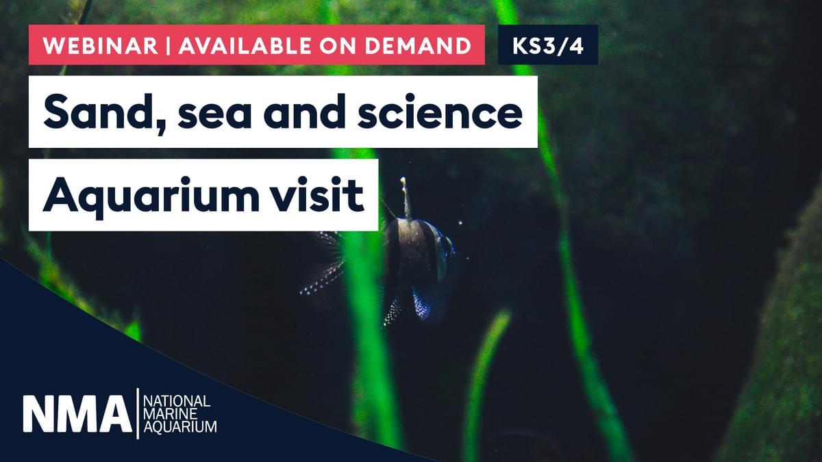 NMA Slate Sand sea and science