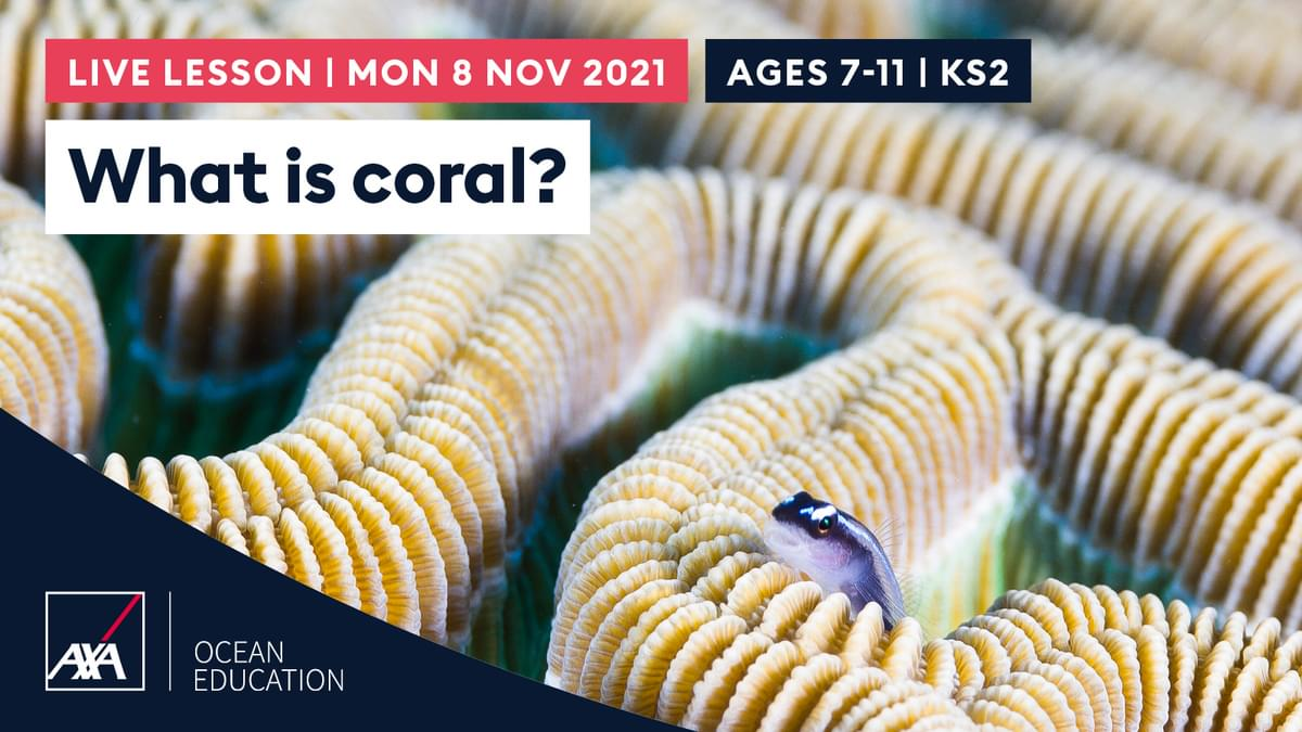 What is coral KS2 CL2021 Slate