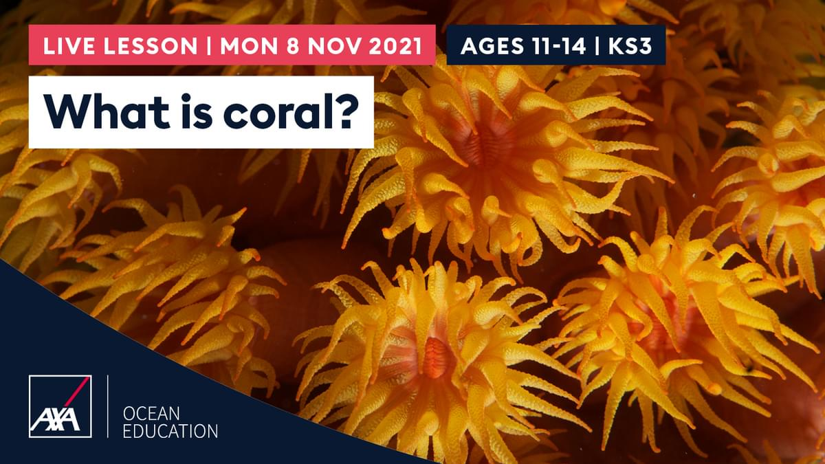 What is coral KS3 CL2021 Slate