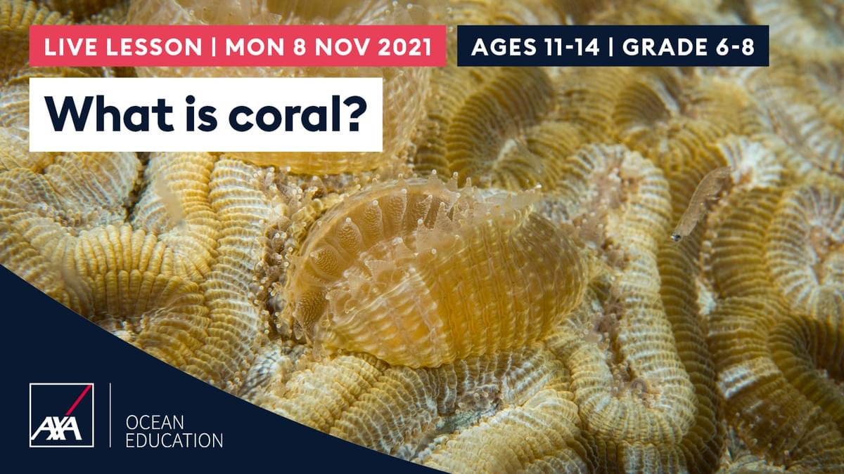 What is coral USA CL2021 Slate