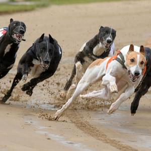 Monmore Monmore Race Tickets Thursday 24th February 2022
