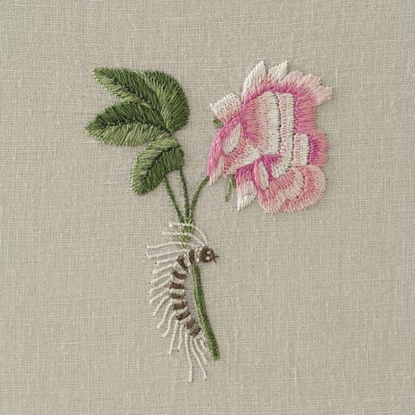 F421 V2 – Hermosa roses