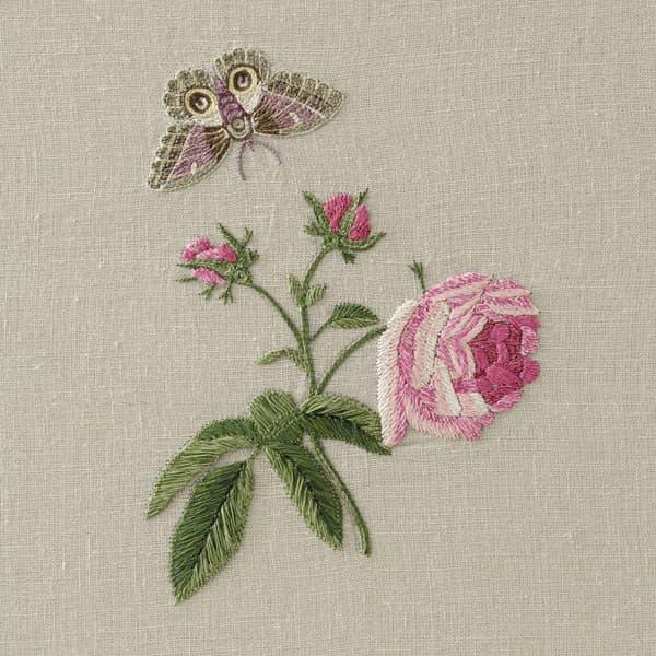 F421 V3 – Hermosa roses