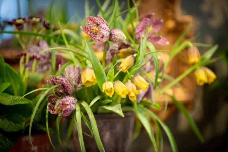 Flowers by Woodbrown