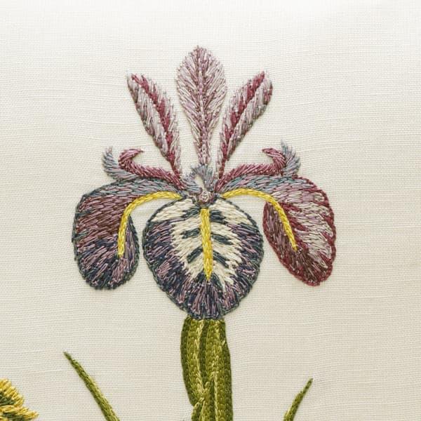 C414 Detail – Caesar iris