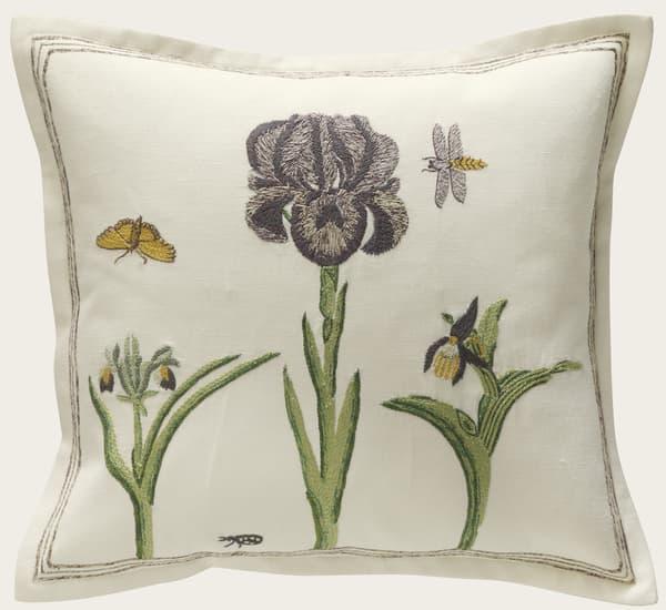 C415 2 1 – Velvet iris with insects