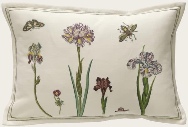C416 1 – Dutch irises