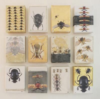Jewels-Scintillating-Scarabs