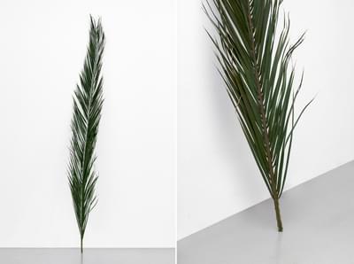 Palm Leaf Lowres