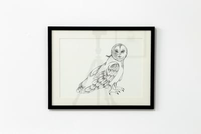 Hamada The Owl