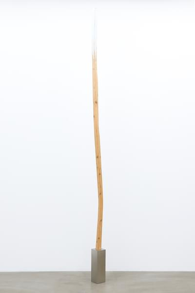 Nobi Sugi