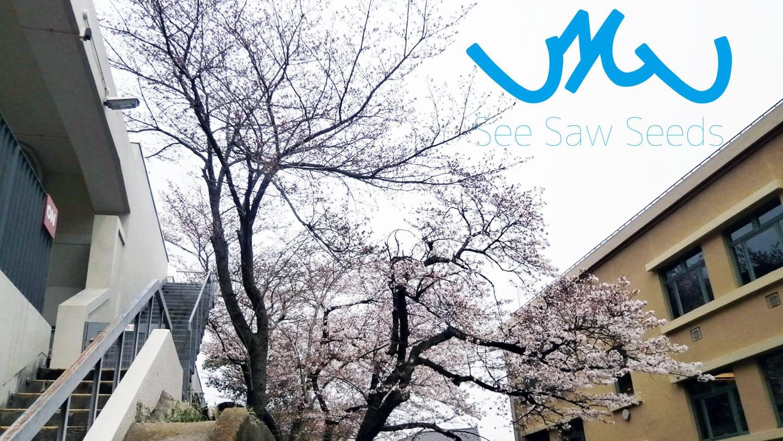 See Saw Seeds 1500X844