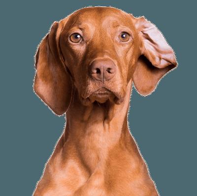 Bad ear day Cutout Resized
