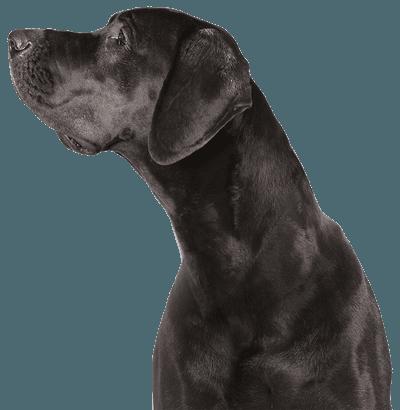 Black Dog Cutout Resized
