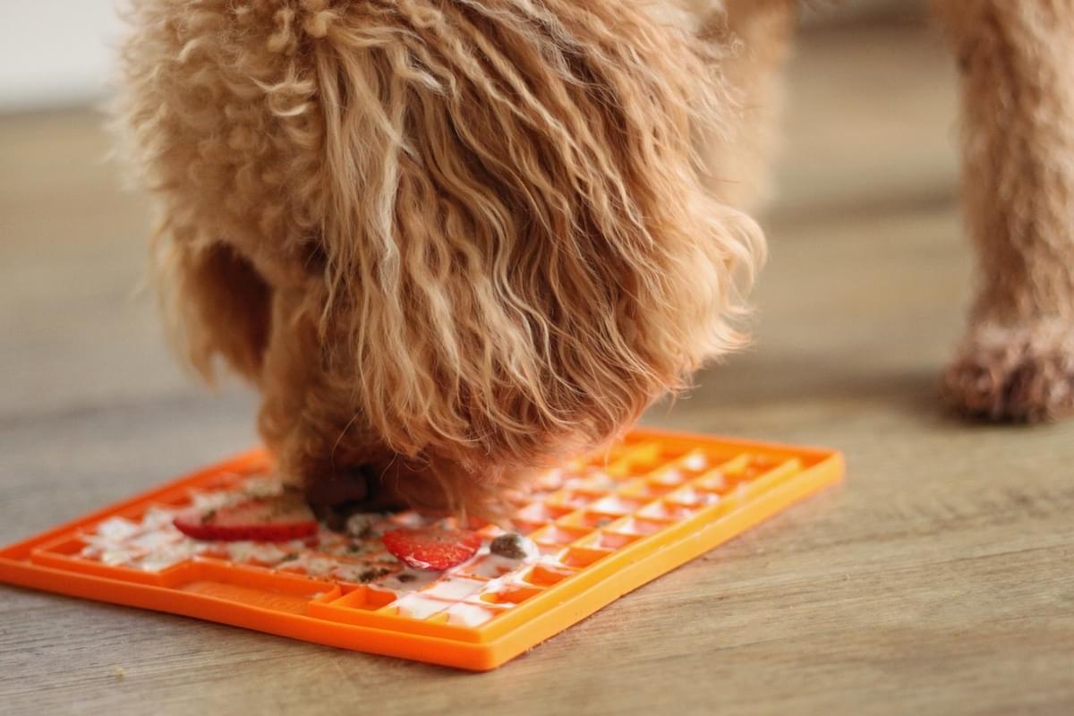 Dog eating Raw Dog Food