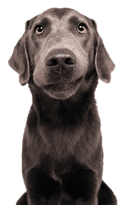 Padme Pup