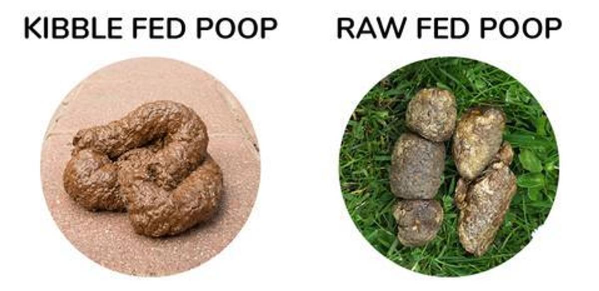 Raw vs Kibble Poop