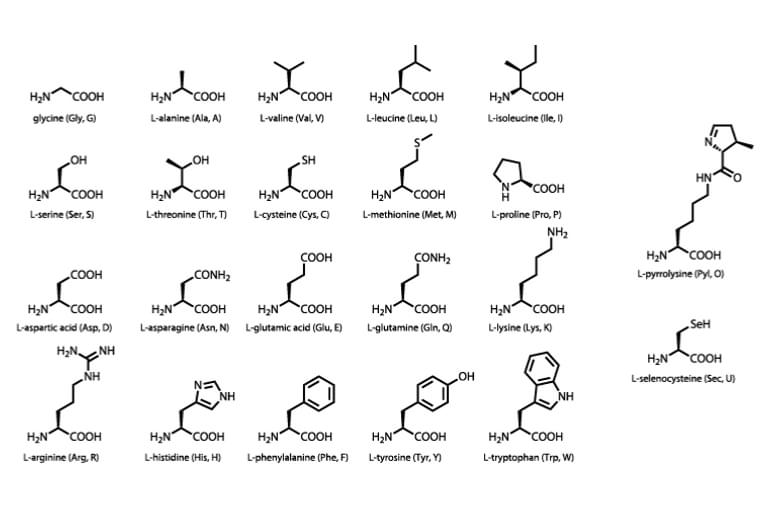Shutterstock 106283207 Amino acids