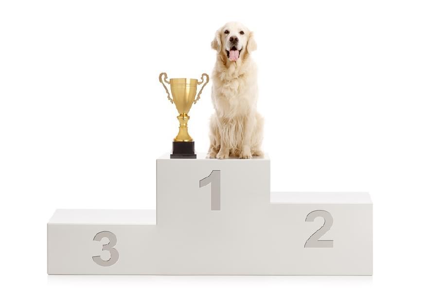 Shutterstock 1172210278 dog on podium 1020 edit 2
