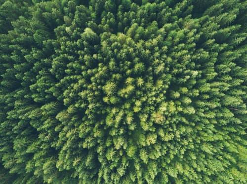 The Environmental Impact of Insurtech