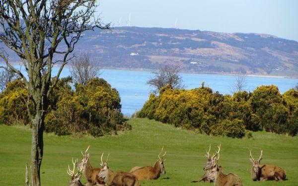 Walk 1 - Deer At Lochranza