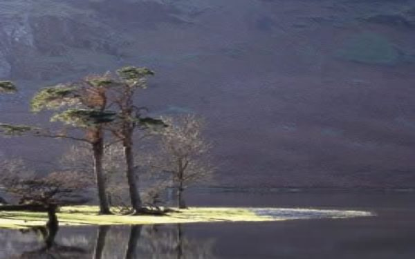 Tranquil Buttermere, on a still May afternoon after rain (Short Walk 6)