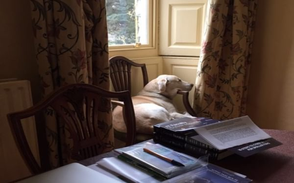 Cassie in her favourite chair at home. Sadly she has now left us too.