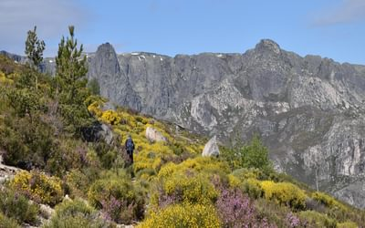 Walking Among A Plethora Of Flowers Towards The Summit Of Poios Brancos Serra Da Estrela