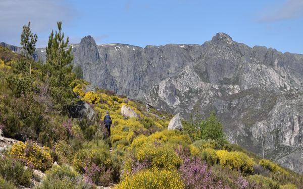 Walking Among A Plethora Of Flowers Towards The Summit Of Poios Brancos Serra Da Estrela