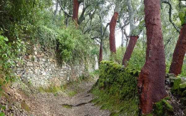 Aracena Ancient Bridleway Close To Linares