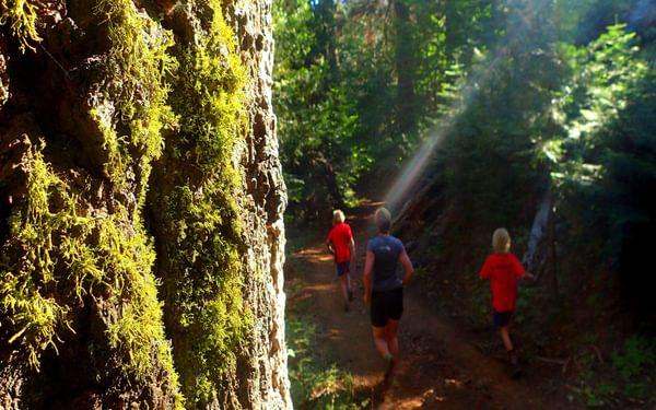 Running Amongst The Redwoods