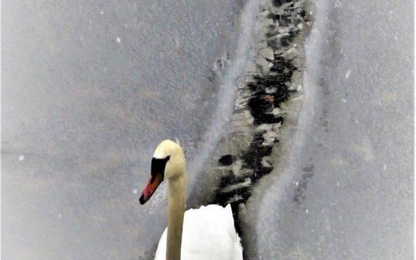 Ice Breaker By Janet Gordon