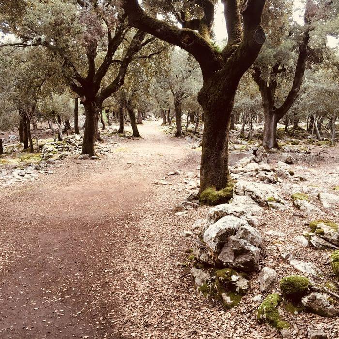 16 Holm Oak Woodland