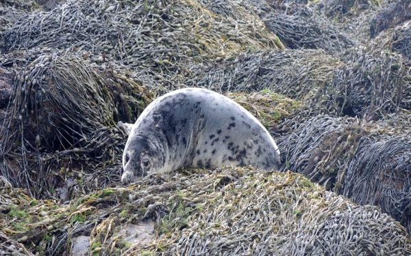 5 Seals Are Often Seen Along The Shore