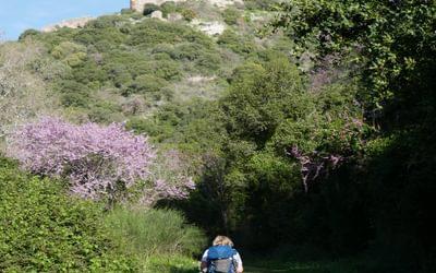 P002 Montfort Crusader Castle Stands High Above The Khziv Gorge