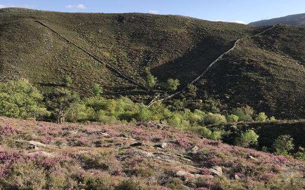 V-shaped wolf-trap near Germil