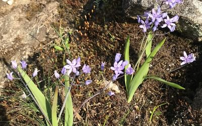 Some of the abundant spring flowers seen in the Peneda-Gerês National Park