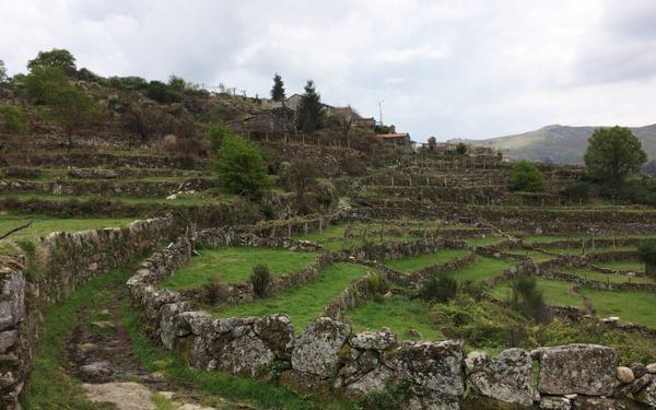 Terraced fields near Vileda de Lajes