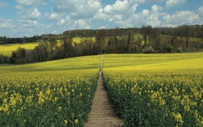 From Nuffield the Ridgeway heads across open fields (photo: Steve Davison)
