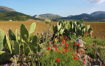 The fertile plain between La Sierra de las Nieves and Ronda (Day 12)