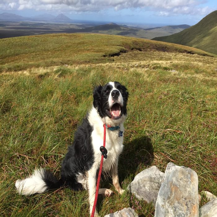 2  Indy On Top Of Nephin Beg